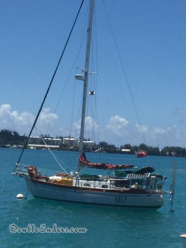 Lily, a  from Spanish Point Bermuda